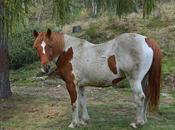 Ippoturismo: relax passeggiate cavallo
