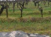 Bordeaux primeurs 2013: impressioni