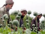 L'oppio afghanistan: salvezza rovina