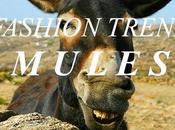 Houston, abbiamo problema: Mules Trend.