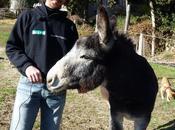 Sonny Richichi nuovo presidente dell'Italian Horse Protection Association Montaione