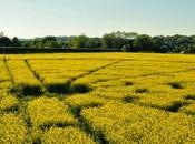 Wiltshire: alla ricerca Cerchi Grano