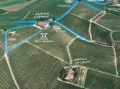 Nelle vigne della Barbera, dove l'arte mescola filari