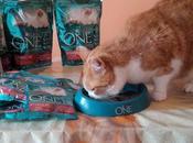 Purina Sterilcat cibo gatti sterilizzati