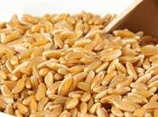 Tutto kamut, cereale benessere