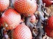 superfrutti: L'Aguaje frutto bellezza della donna
