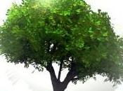 corsi online universitari ecosotenibili