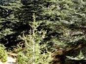 Libano: difficili alchimie eleggere Presidente