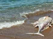 Assurdità nostrane pesce gigante sulla spiaggia Casteldaccia