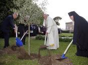 L'olivo vaticano: pace noi.