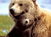 """Parte progetto """"Caring dogs saves bears"""""""