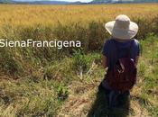 Turismo lento lungo Francigena nelle Terre Siena