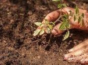 Agricoltura Sinergica. origini, l'esperienza, pratica