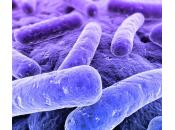 cos'è placca batterica?