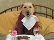 L'alimentazione cane