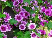 fare tutto vuole fiore_Ecco giardini piccoli