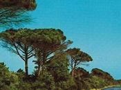 LUNGO ADDIO, Pinarella Blues
