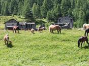 amazing tiny village: Cheneil, Valle d'Aosta