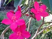 Natura parla fiore