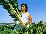 Spiritualità coltivazione delle bietole