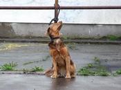 Cani abbandonati: Napoli Roma peggiori