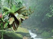 Natura Selvaggia Tranquillità