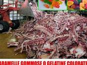 Carcasse animale diventano caramelle gommose