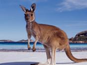 Vacanza Australia: informazioni utili!