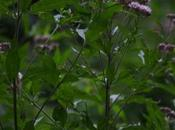 Fiori bosco mezza estate
