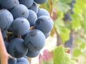 """Vino Veritas"""" eventi grande vino Sannio"""