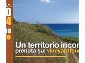 Mandrarossa Vineyard Tour: antichi sapori tradizioni secolari