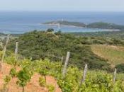 Corsica Sud: viaggio bottiglie
