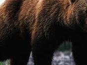 WWF: alla cattura dell'orsa Daniza