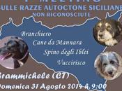 """""""Club Pastore Siciliano"""", meeting sulle razze canine siciliane riconosciute"""