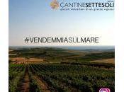 Instagramers siciliani Menfi prima #VendemmiaSulMare