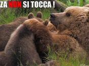 Salviamo Mamma Orsa Suoi Piccoli!
