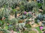 Giardini Semplici primato dell'Orto Botanico Napoli