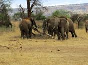 Safari Kenya quattro giorni: sulle tracce five
