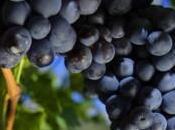 Alto Adige Cura dell'Uva