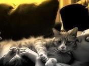 Come evitare contagio toxoplasmosi gravidanza gatto