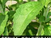 Stevia, pianta dolcificante