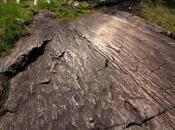 Scivolando sulle rocce favorire fertilità.