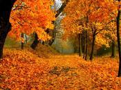 Luoghi Foliage