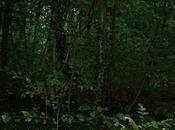 richiamo della foresta