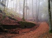"""Nella nebbia"" Hermann Hesse"
