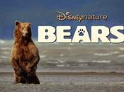 Bears, Daniza salmone