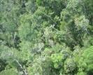 attivisti cambogiani: taglio illegale distrugge ultime foreste