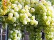 Vino Pecorino d'Abruzzo L'Italia Piatto
