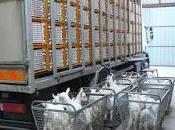 Video: lato oscuro dell'industria latte