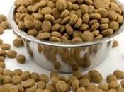 falsi miti sulla nutrizione cani gatti